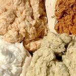 algodão colorido em sua forma natural e suas respectivas cores